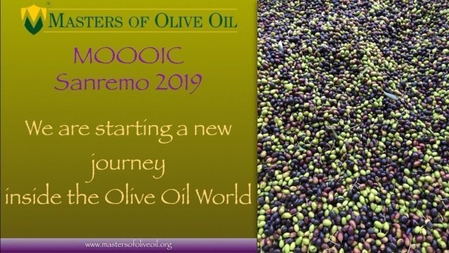 Masters of Olive Oil International Contest 2019 Edition. We are looking for the best olive oil in the world